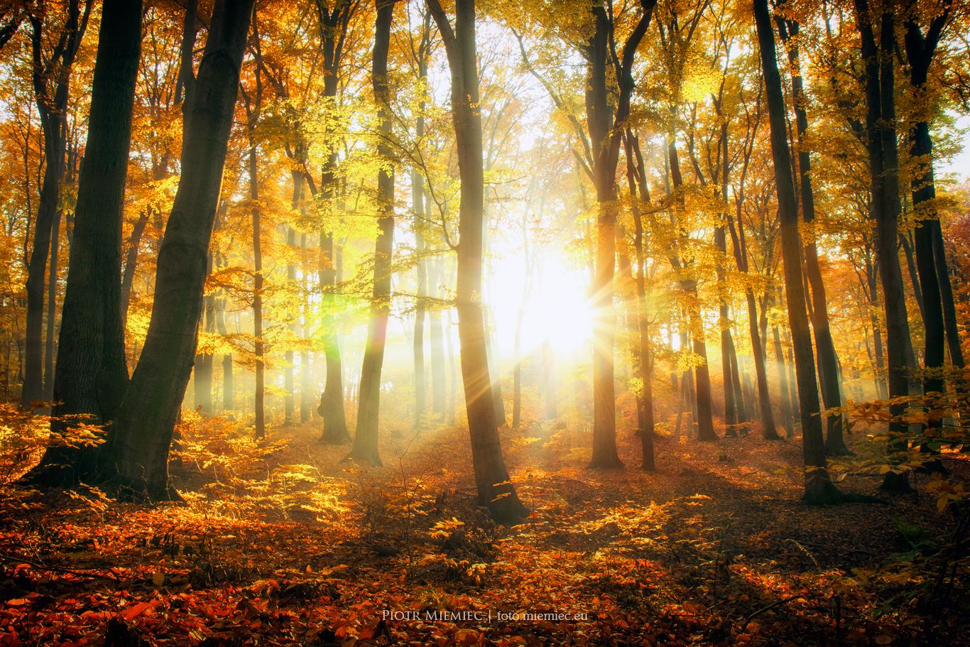 Jesień w repeckim parku