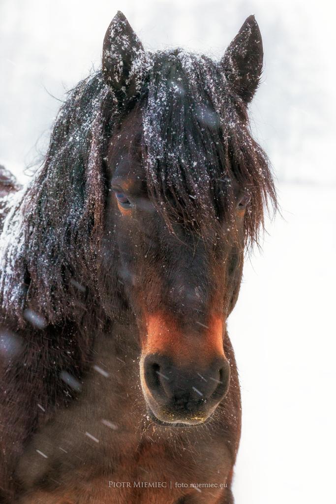 Konie - 2
