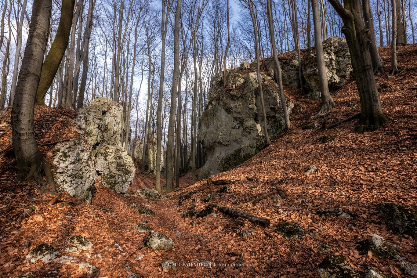 Zubowe Skały Rezerwat przyrody Pazurek